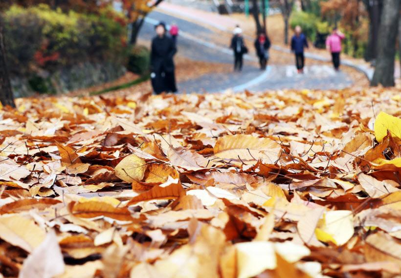[포토]낙엽 쌓인 길을 걷다