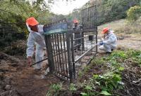 파주·연천, 아프리카돼지열병 차단 `멧돼지 철조망` 설치 마쳐