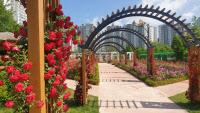 [포토]붉게 물든 오산 고인돌역사공원 `장미뜨레`